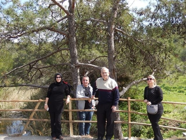 Girne Geçitköy Barajı Yolu Üzerinde Bitişik Ağaç -15